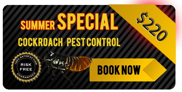 Summer special gold coast and tweed pest inspection